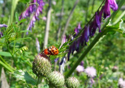 La biodiversité des espaces verts : la rétablir et l'entretenir