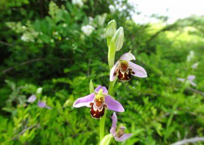 La flore locale : l'identifier et comprendre son rôle
