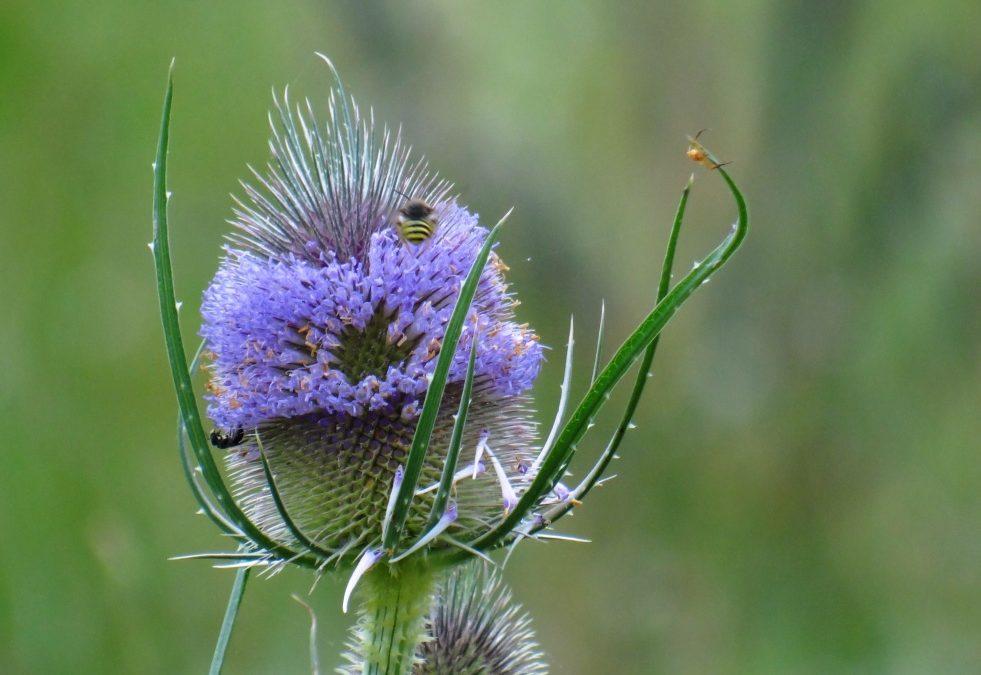 Plantes bio-indicatrices