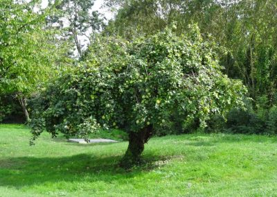 L'arbre champêtre : intérêt, plantation et entretien