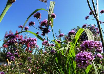 Le fleurissement durable : intérêts et méthodes
