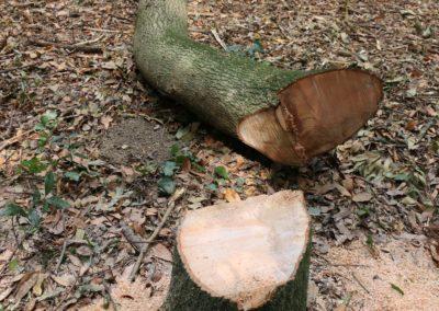 Tronçonneuse : sécurité, utilisation au sol et entretien